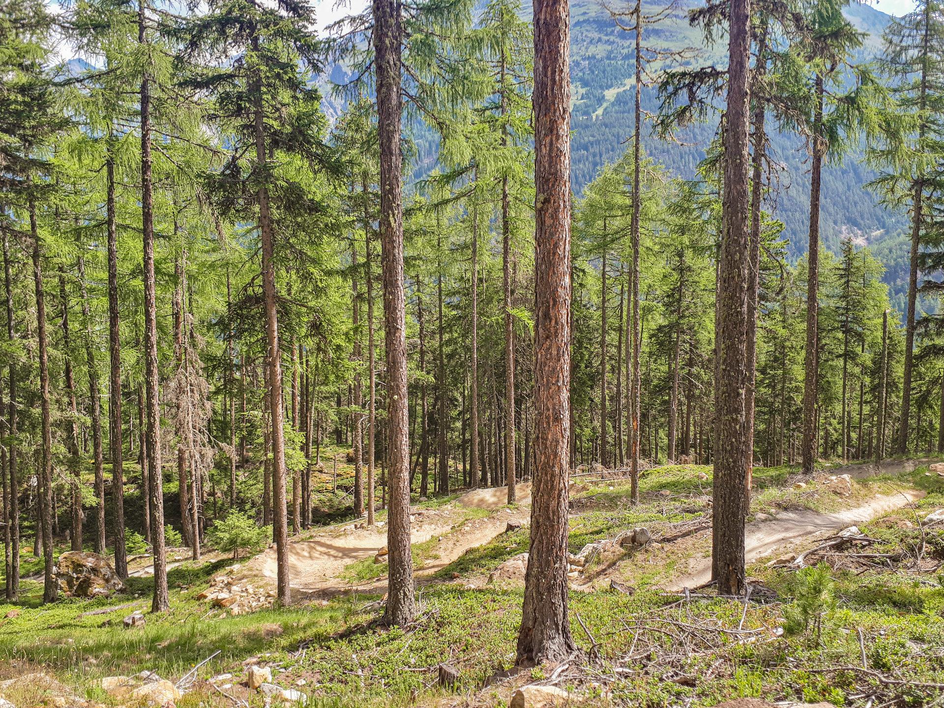 Лес вокруг Teäre Line